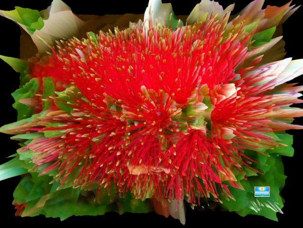 Bottlebrush Flower Power 3D