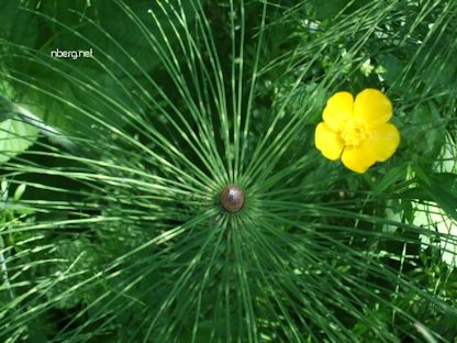 Nature's horsetail mandala